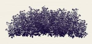 Andrew Millner Black Echinacea